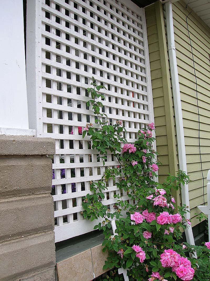 Build Diy Wooden Rose Trellis Designs Pdf Plans Wooden